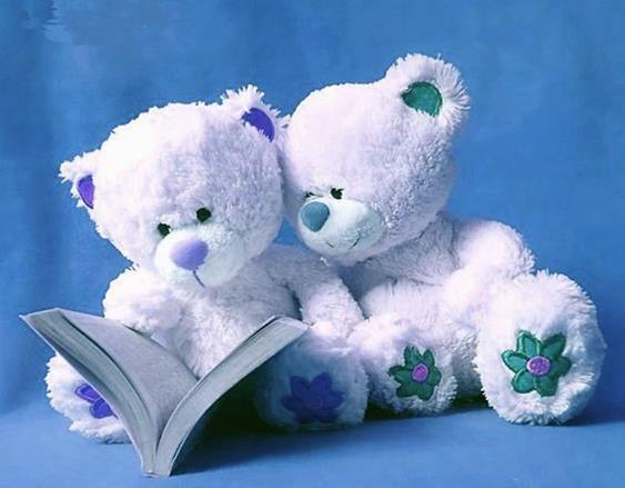 photo of two stuffed animal bears reading a book together
