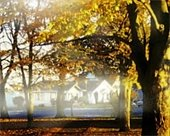 Photo of oak trees in Clark park in the autumn with the sun shining through and mist on the street