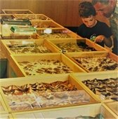 Photo of child and parent looking at insect display