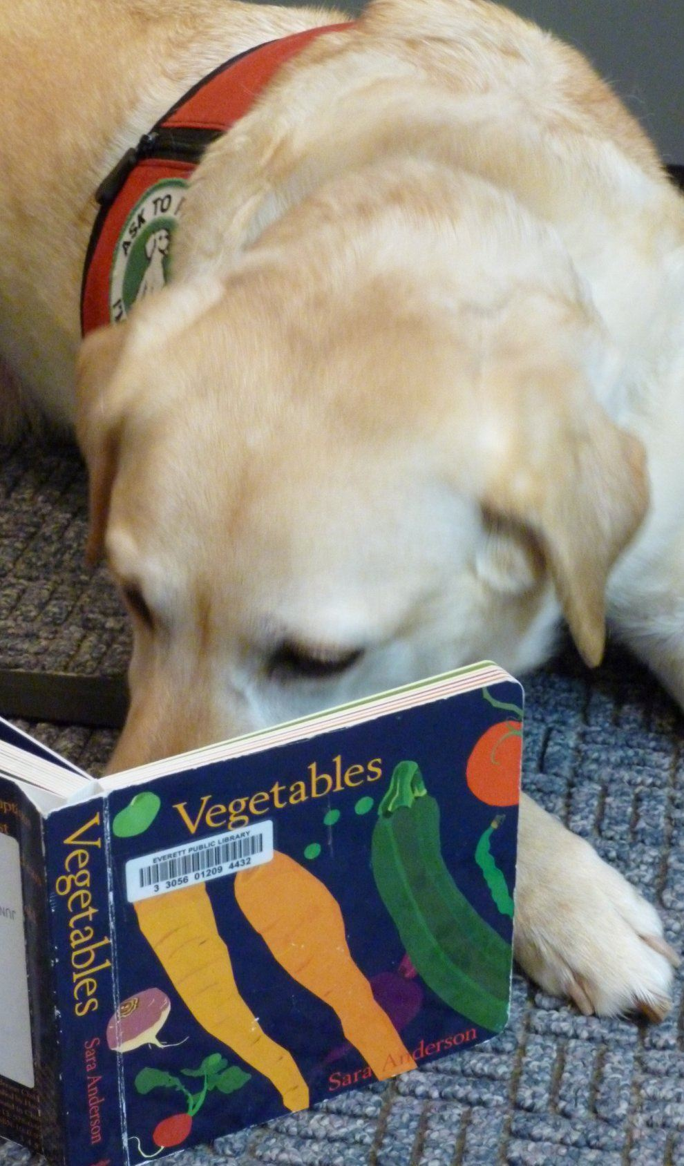 Picture of one of the Paws to Read dogs looking at a book.