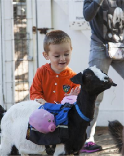Photograph of a young child petting a goat